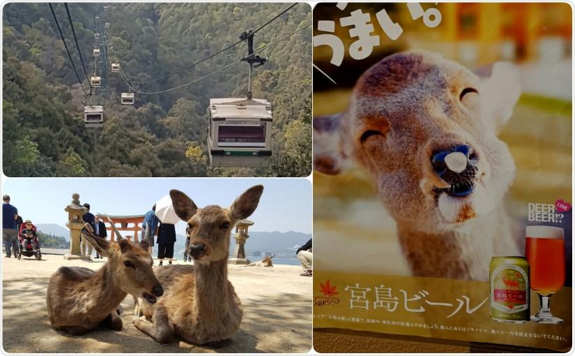 Die heiligen Rehe auf Miyajima